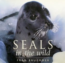 Seals in the Wild by Fred Bruemmer