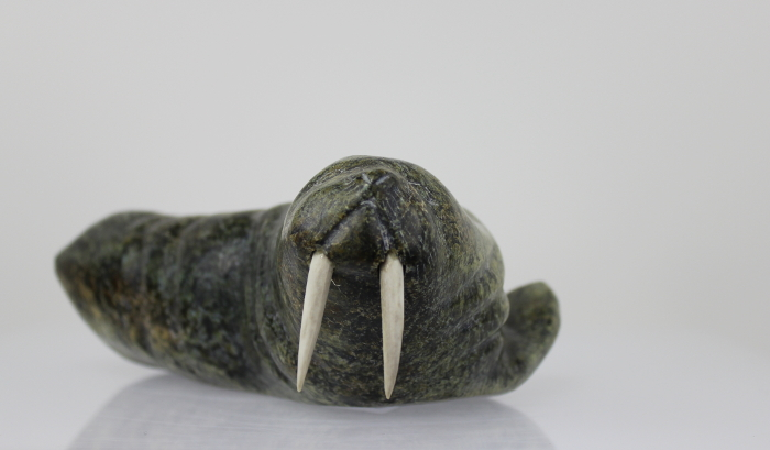 Walrus from Salluit