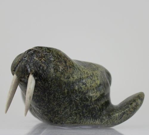 Walrus from Salluit