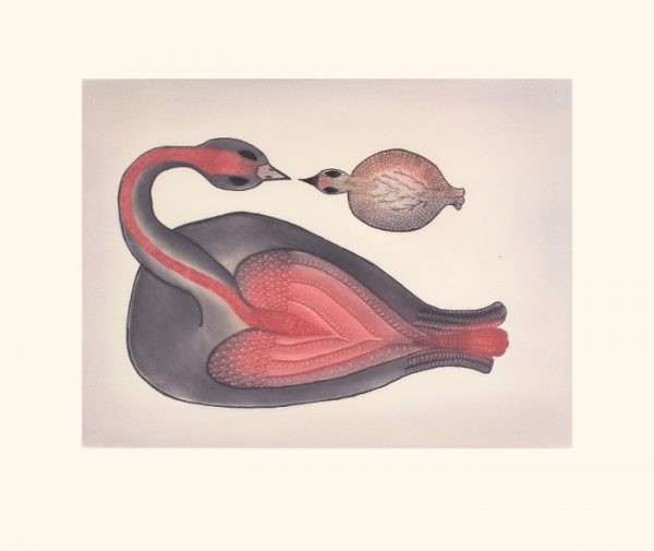 Loving Loon by Pee Ashevak 21-05 2021 Cape Dorset Print Collection